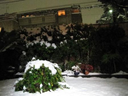 自宅の庭もまっ白の雪景色
