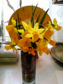 昨日の強風で倒れかけていた自宅の庭の水仙の花